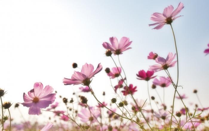 flowers-1476517_1920