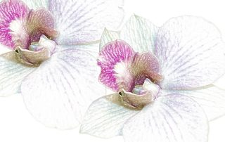 orchid-1869625_1920